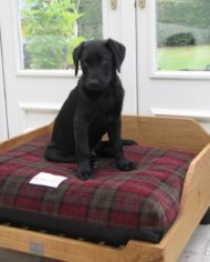 Berkeley Tartan Fabric Luxury Dog Bed Covers-3