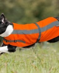 Petlife Flecta High Vis Dog Coat-4