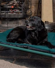 Travel_dog_bed_720x