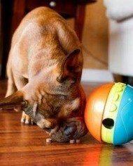 Treat Chaser Dog Game-2
