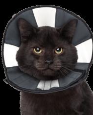 ZenPet ProCone Recovery Cone-1