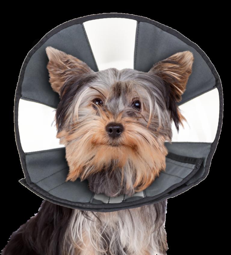 ZenPet ProCone Recovery Cone